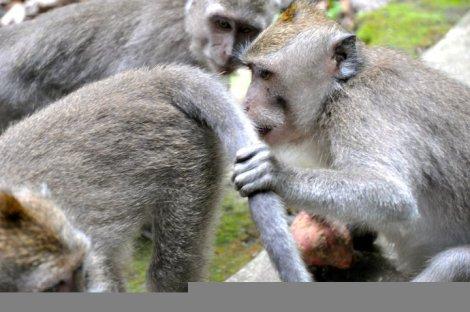 monkeys-sniff